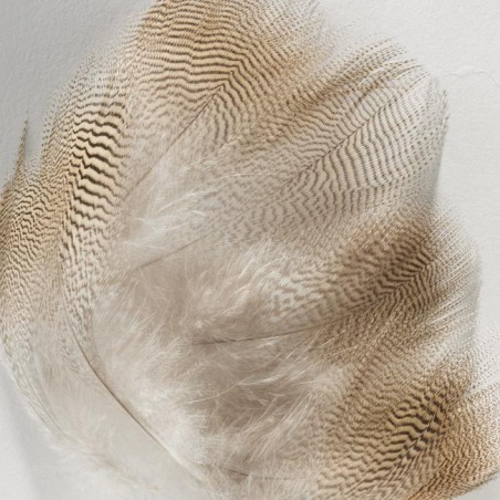 Wood Duck Flank Feathers