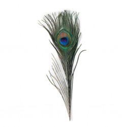 Peacock Eyed Tails